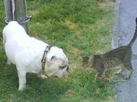 Giardioza pasa i mačaka